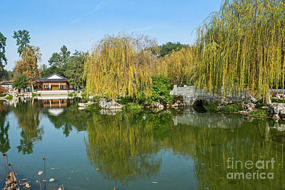 Chinese Garden At The Huntington Library. Art Print