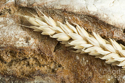 Photograph - Close Up Bread And Wheat Cereal Crops by Deyan Georgiev