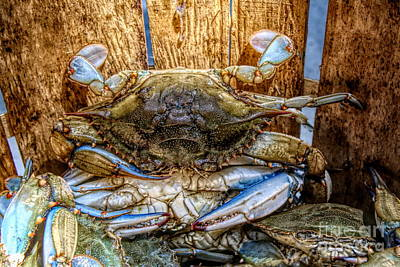 Photograph - Crabby by Paulette Thomas