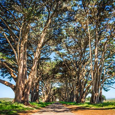 Photograph - Cypres Tree Tunnel At Point Reyes  National Seashore by Alex Grichenko