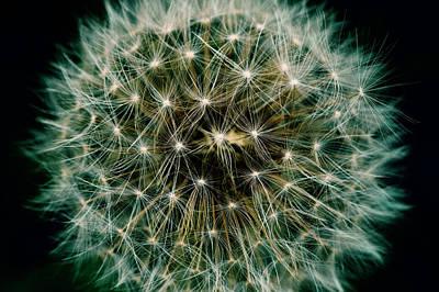 Photograph - Dandelion by Chevy Fleet