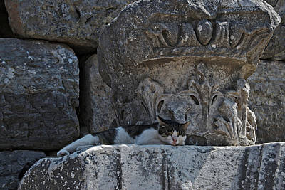 Photograph - Ephesus Turkey by Cendrine Marrouat