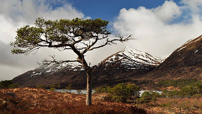 Photograph - Glen Affric by Gavin Macrae