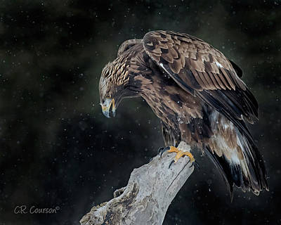 Photograph - Golden Eagle by CR Courson