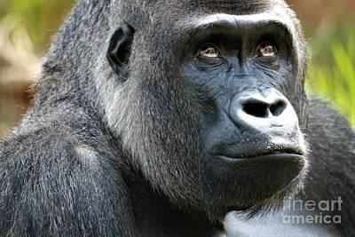 Gorilla Art Print by Paulette Thomas