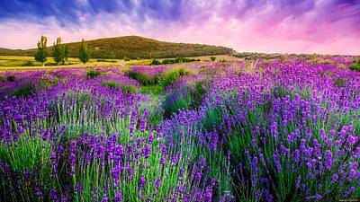 Flower Digital Art - Lavender by Super Lovely