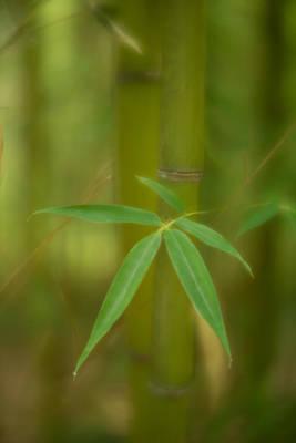 Photograph - 5 Leaves by Joye Ardyn Durham
