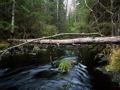 Photograph - Liesijoki.  Seitseminen National Park by Jouko Lehto