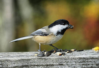 Photograph - Little Bird by Lilia D