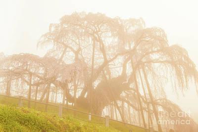 Photograph - Miharu Takizakura Weeping Cherry06 by Tatsuya Atarashi
