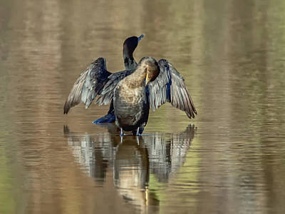Photograph - Neotropic Cormorants by Tam Ryan
