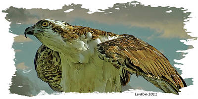 Hawk Birds Digital Art - Osprey by Larry Linton