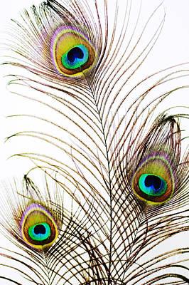 Peacock Feathers Art Print by Mary Van de Ven - Printscapes