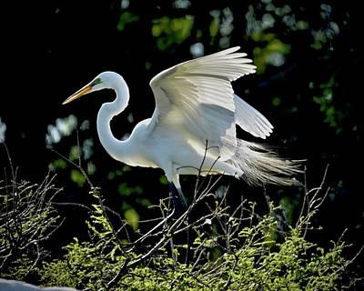 Photograph - Perfect Landing by Carol Bradley