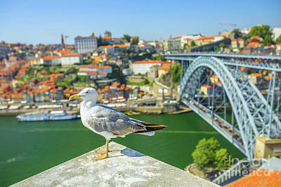 Photograph - Porto Skyline Seagull by Benny Marty