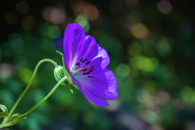 Photograph - Purple Flower by Lilia D