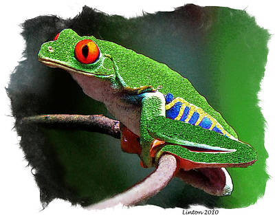 Red-eyed Leaf Frog Art Print by Larry Linton