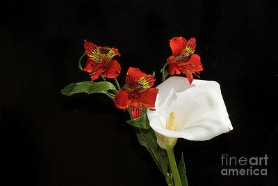 Photograph - Red With White by Elvira Ladocki