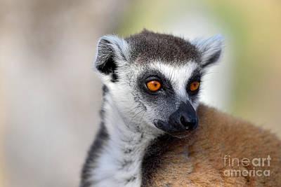 Portrait Photograph - Ring Tailed Lemur by George Atsametakis