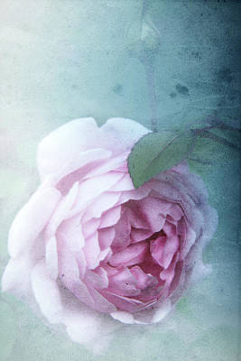 Photograph - Rose by Lali Kacharava