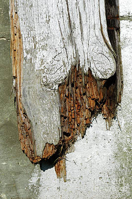 Photograph - Rotting Wood by Tom Gowanlock
