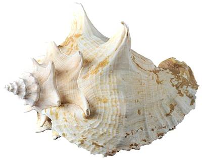 Sea Shell Photograph - Sea Shell by George Atsametakis
