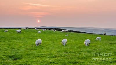 Farmanimals Photograph - Sheep by Mariusz Talarek