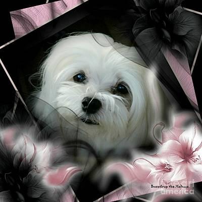 Dog Photograph - Snowdrop The Maltese by Morag Bates
