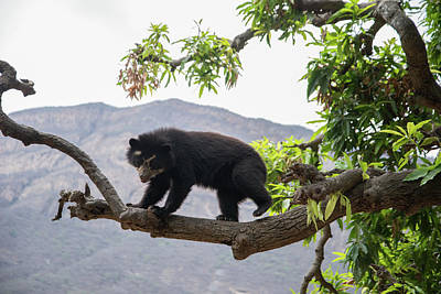 Digital Art - Spectacled Bears by Carol Ailles