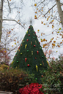 Photograph - 5 Story Sdc Tree by Jennifer White