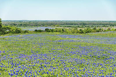 Photograph - Texas Bluebonnets 10 by Victor Culpepper