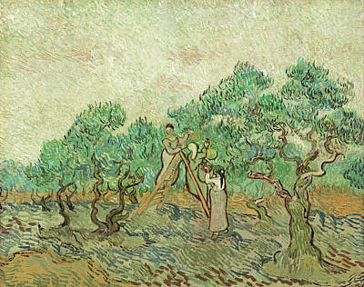 Painting - The Olive Orchard by Vincent van Gogh