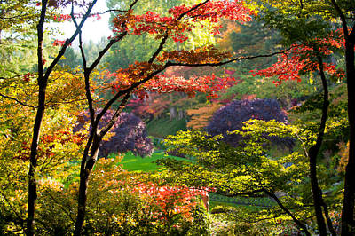 Trees In A Garden, Butchart Gardens Art Print by Panoramic Images