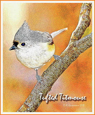 Titmouse Digital Art - Tufted Titmouse by A Gurmankin