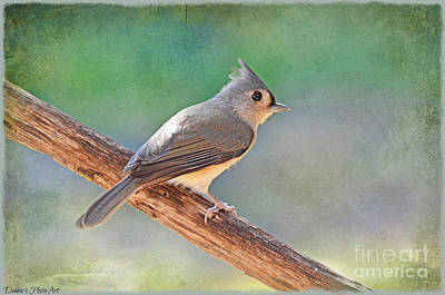 Tufted Titmouse Photograph - Tufted Titmouse  by Debbie Portwood