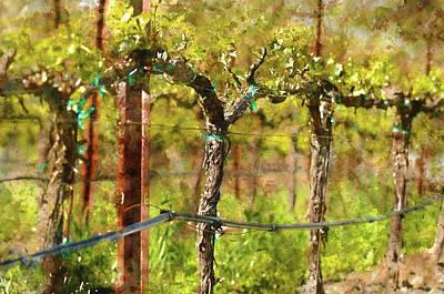 Wine Decor Photograph - Vineyard In Spring by Brandon Bourdages