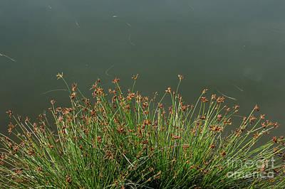 Open Impressionism California Desert - Weed grass  by Antoni Halim