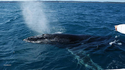 Photograph - Whale Blow by Gary Crockett