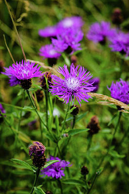 Photograph - Wild Flowers by Miguel Winterpacht