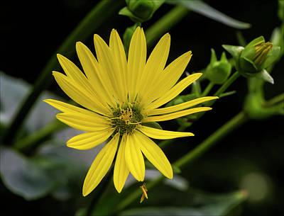 Photograph - Yellow Flower by Robert Ullmann