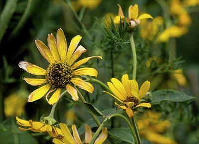 Photograph - Yellow Flowers by Robert Ullmann