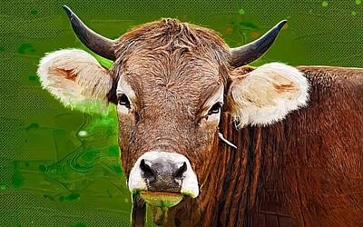 Bison Digital Art - Bull by Anna J Davis