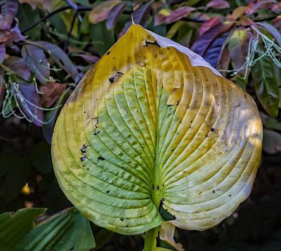 Garden Fruits - Fall Foliage by Robert Ullmann