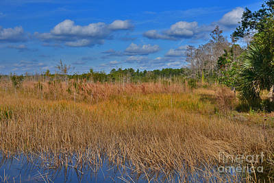 Photograph - 50- Florida Everglades by Joseph Keane