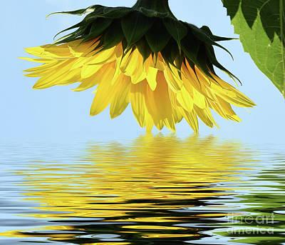 Nice Sunflower Art Print by Elvira Ladocki