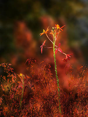 Photograph - 4112 by Peter Holme III
