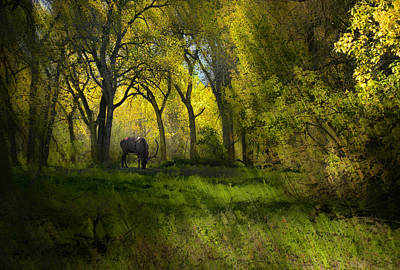 Photograph - 4118 by Peter Holme III