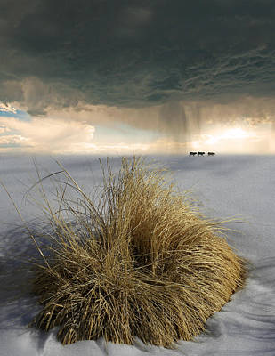 Photograph - 4120 by Peter Holme III