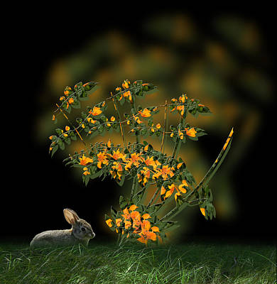 Photograph - 4133 by Peter Holme III