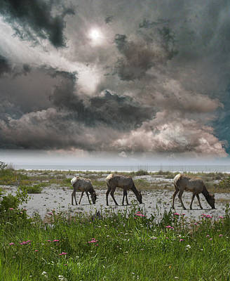 Photograph - 4143 by Peter Holme III